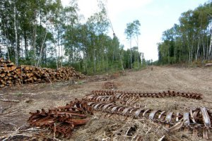 Охрана лесов в законодательстве РФ