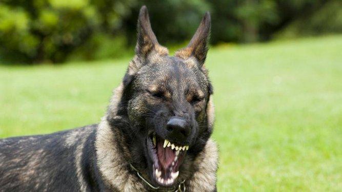 За выгул опасной собаки без намордника будут штрафовать